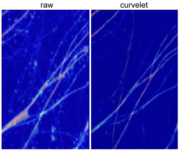 Analysis of neuronal morphology with curvelets.